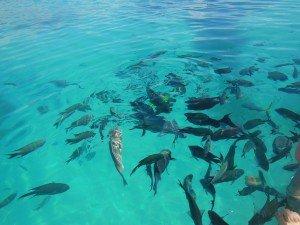 Day 11 : Seventeen seventy - Lady Musgrave - Agnès Water : 7 km dans 5. The Great Barrier Reef dscn26951-300x225