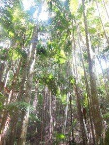 dscn27911-225x300 dans 6. Hervey Bay - Fraser Island - Noosa